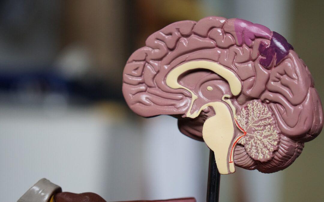 The Neurofeedback Journey (Intro)